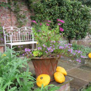 PASHLEY MANOR GARDENS Kitchen Garden Pot By Kate Wilson