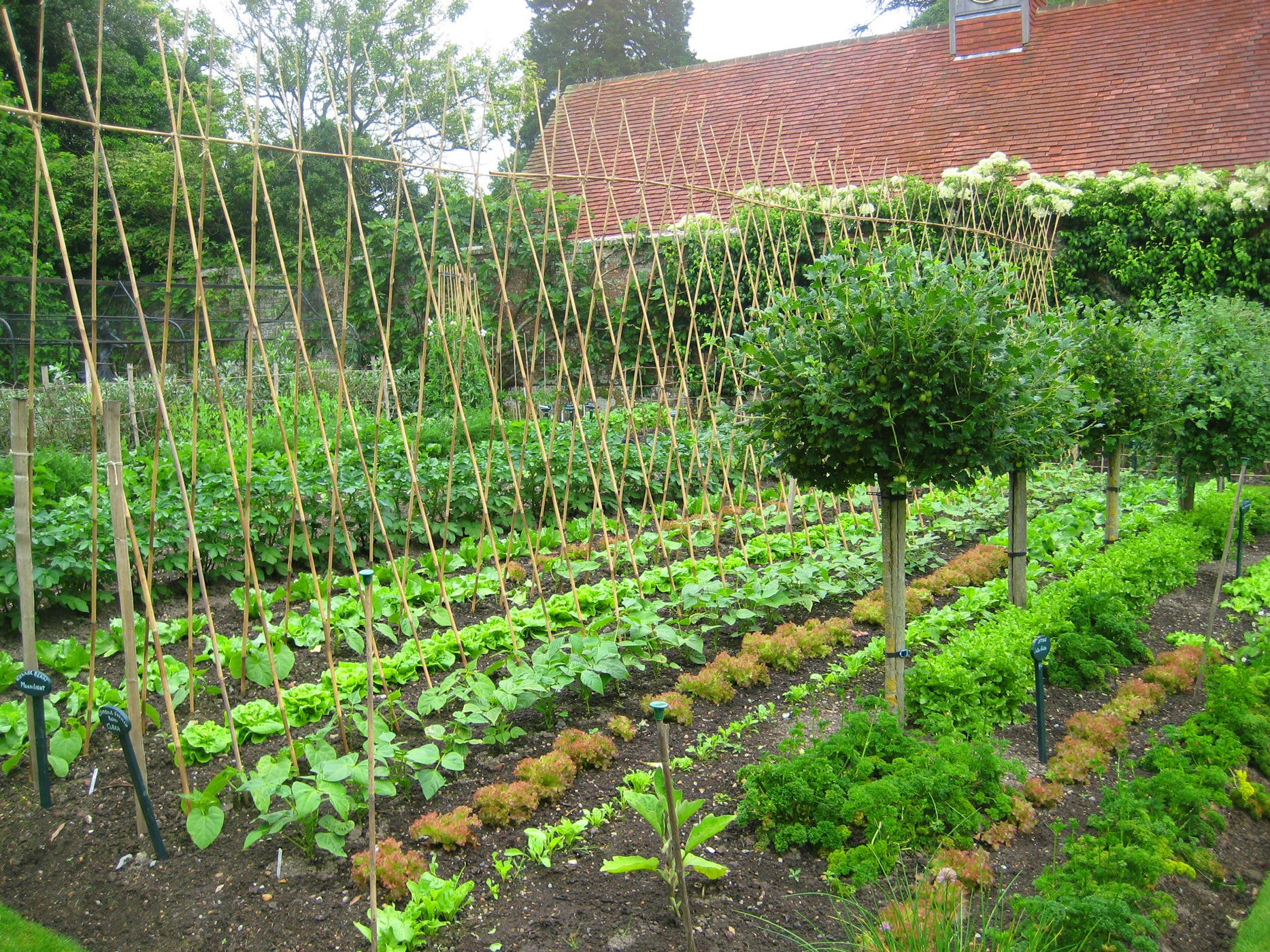 Kitchen Garden Week - Pashley Manor Gardens