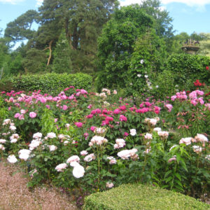 PASHLEY MANOR GARDENS Rose Garden By Kate Wilson