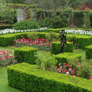 PASHLEY MANOR GARDENS Rose Garden By Kate Wilson Sq Crop