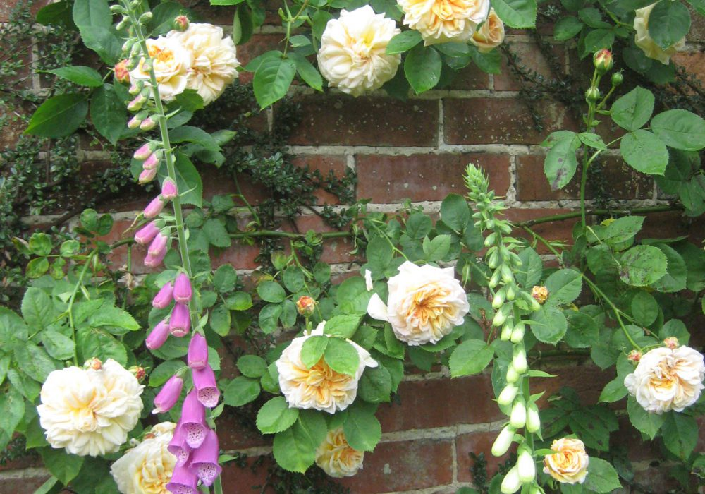 PASHLEY MANOR GARDENS Roses And Foxgloves By Kate Wilson
