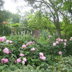 PASHLEY MANOR GARDENS By Stellata Bed By Kate Wilson