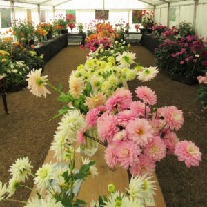 PASHLEY MANOR GARDENS Dahlia Marquee By Kate Wilson