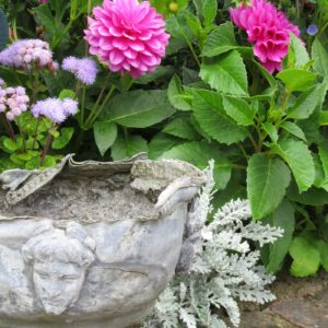PASHLEY MANOR GARDENS Dahlias And Pot By Kate Wilson For Poster