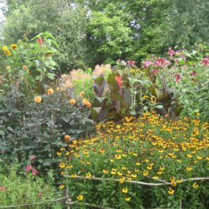 PASHLEY MANOR GARDENS Early Autumn Borders By Kate Wilson