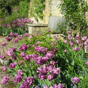 PASHLEY MANOR GARDENS Purples By The Pool By Kate WIlson
