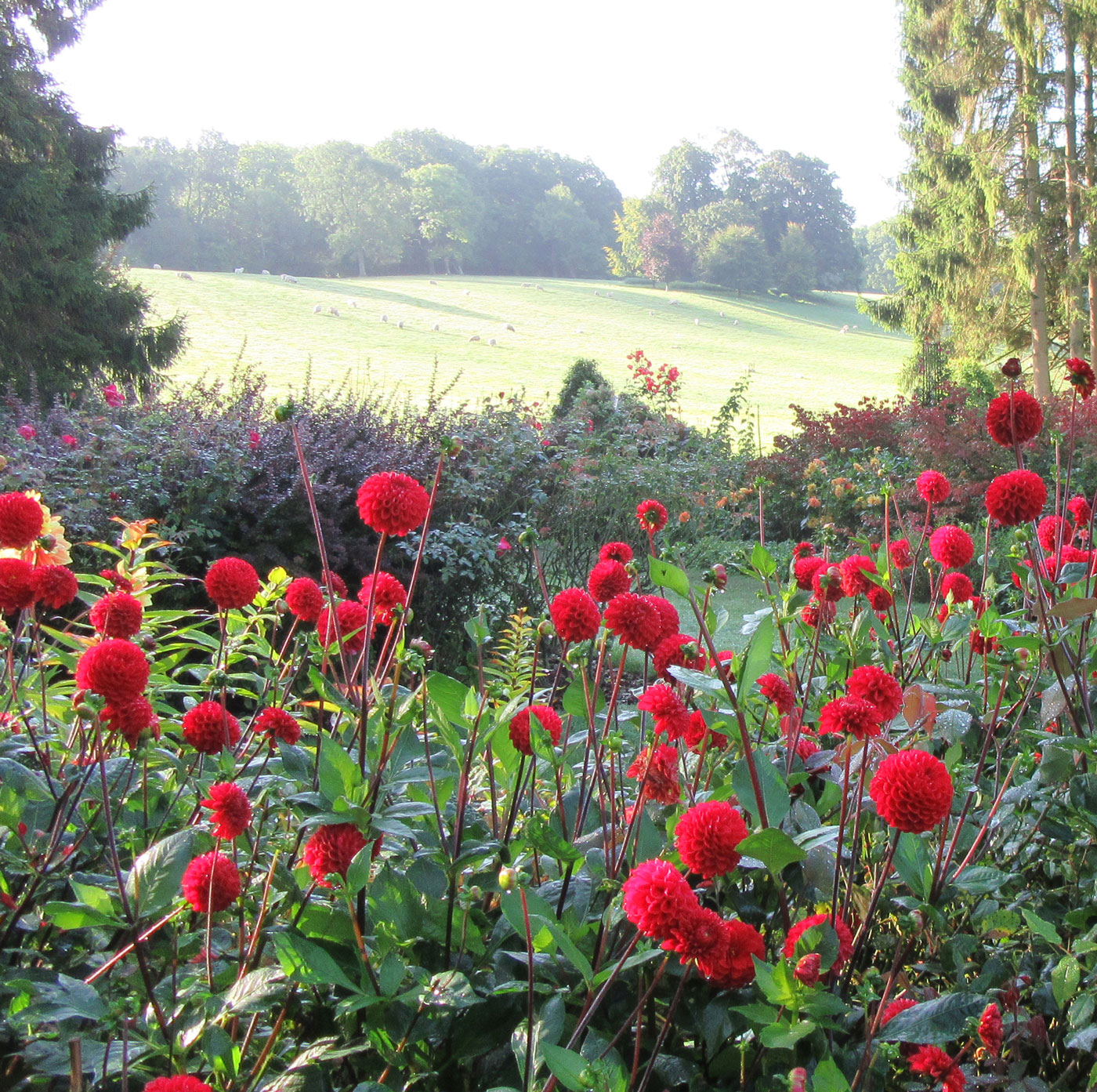 PASHLEY MANOR GARDENS Reds In The Hot Borders By Kate Wilson