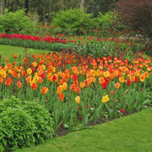 PASHLEY MANOR GARDENS Tulips In The Hot Bordersby Kate Wilson