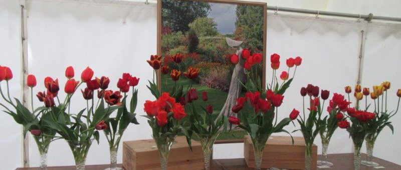 Tulip Marquee