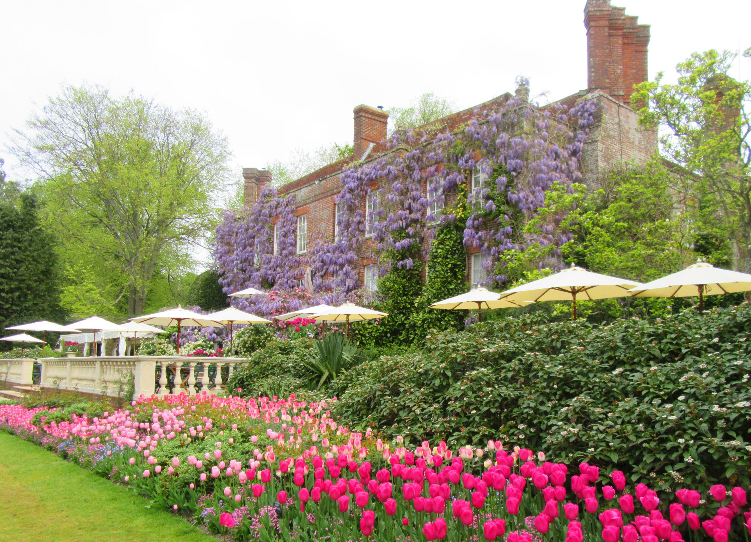 PASHLEY MANOR GARDENS back terrace, tulips and wisteria by Kate Wilson